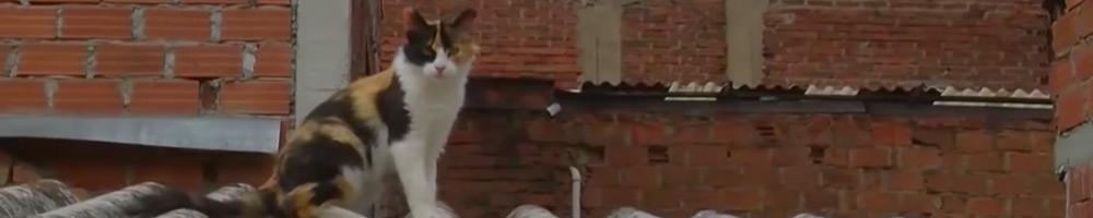 ahuyentador de gatos eficiente y aleje los gatos de su propiedad