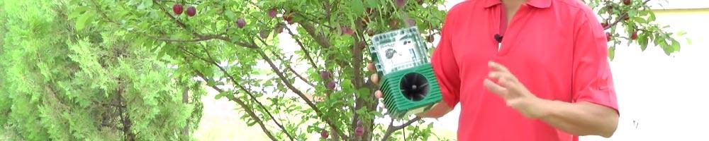 ahuyentador de pájaros para evitar que se coman los frutos de los árboles en el campo